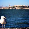 Watching Alcatraz